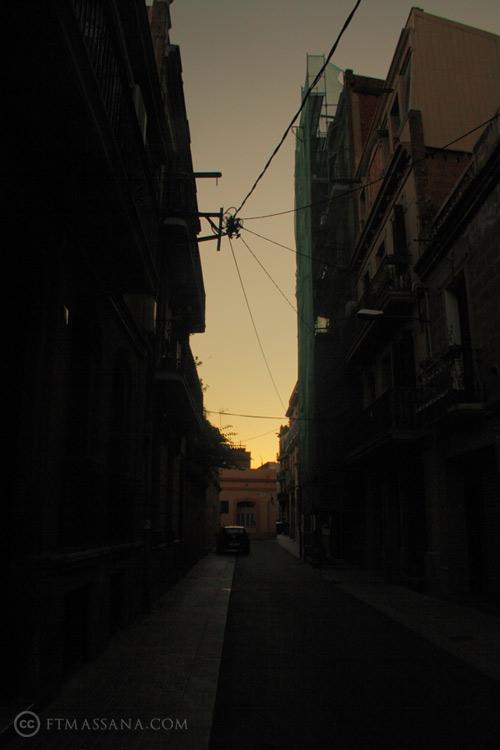 naturaleza-urbana-aranas.jpg