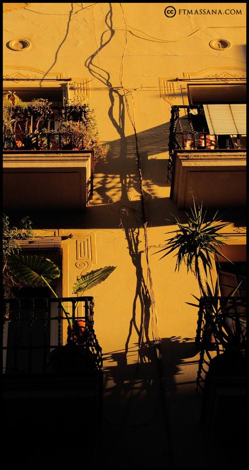 naturaleza-urbana-raices.jpg